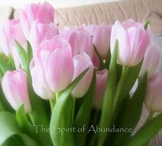 My lovely Spring tulips I cought on camera