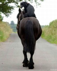 Well someone has to take this horse back to the barn. I see how it is though, I always get the easy and boring jobs.