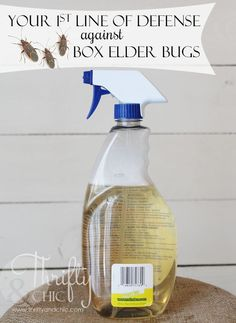 to rid your house of those pesky box elder bugs.the safe way Kill box elder bugs with two simple ingredients! Safe for children and petsKill box elder bugs with two simple ingredients! Safe for children and pets Cleaning Recipes, Diy Cleaning Products, Cleaning Hacks, Box Elder Bugs, Homekeeping, Bugs And Insects, Gardening Supplies, Do It Yourself Home, Pest Control