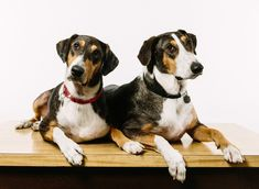 Cloning Your Dog, For A Mere $100,000 : Shots - Health News : NPR