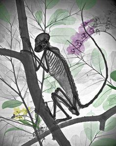 X-Ray Art – Un artiste colorise la nature aux rayons X