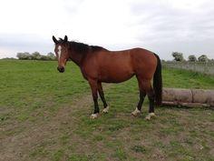 Twix enjoying an early Summer holiday. Horses For Sale, Irish, Ireland, Holiday, Summer, Animals, Vacations, Summer Time, Irish People