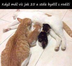 Funniest Cat Memes, Funny Animal Memes, Cute Funny Animals, Funny Cute, Cute Cats, Funny Memes, Dog Memes, Funniest Animals, Jokes