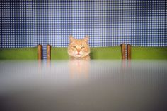 Leading Photographers' Snapshots of Nonchalant Cats | AnOther