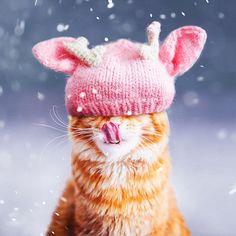 12.3 тыс. отметок «Нравится», 86 комментариев — Kristina Makeeva↟Kotleta↟Timon (@hobopeeba) в Instagram: «Sit and review photos with Kotleta cat. My winter cat ☺️ // Такого снегопада, такого снегопада…»