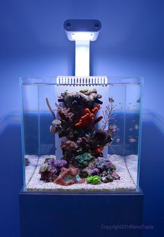 "Very excited to have Christine ""NanoTopia"" Lord test out the new Nano Doser 1 in her stunning nano-reef tanks."