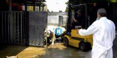 L'Ordine di Brescia apre procedimento contro i veterinari dello scandalo Italcarni