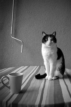 Photographe Cats, Animals, Photography, Gatos, Animales, Animaux, Animal, Cat, Animais