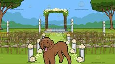A Handsome Poodle With An Outdoor Wedding Ceremony Venue Background:  A dog with curly brown fur droopy ears and black nose looks ahead while parting its lips to show a pink tongue and An outdoor wedding ceremony set in the greens with trees fancy gold wedding chairs with gray cushion flowers with white stands aligned on the sides of the aisle and a beautiful wedding arbor with a gray platform flowers and leaves towards the end of the walkway