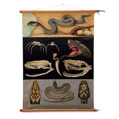 Viper & Grass Snake School Chart