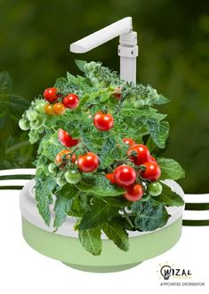 Grofresh Kitchen Garden Review & Giveaway http://melaniesfabfinds.co.uk/beauty/grofresh-kitchen-garden-review-giveaway/ #growyourown #food #healthyliving #healthyeating #kitchengarden #herbs #fruit #plants #win #competition #prize #giveaway