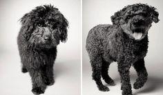 Dog Years: Faithful Friends Then & Now Photography Book by Amanda Jones - Dog Milk Amanda Jones, Dog Photos, Dog Pictures, Dog Milk, Dog Years, Dog Eating, Old Dogs, Dog Show, Photo Projects