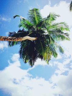 Top tip - don't lie under a coconut palm!