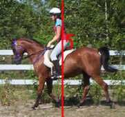 How To Post the Trot