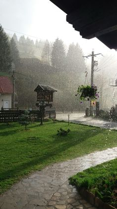 A fox's wedding (raining while sunny)