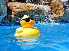 Duck chilling