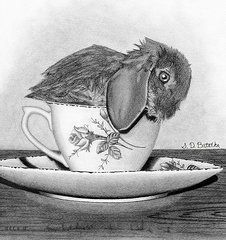 Graphite Drawings - Bunny In A Tea Cup  by Sarah Batalka
