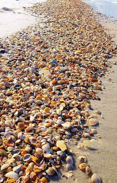 Shell Beach Sanibel Island, Florida Sanibel was so beautiful, I definitely want to go back some day - one of my best vacations ever.