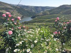 Douro  #douro #portugal by mjoaosaleiro