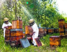 Beehive Image, Honey Images, Blueberry Farm, Bee House, Bee Farm, Honey Bees, Beekeeping, Insects, Paradise