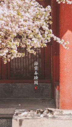 Aesthetic Japan, Aesthetic Art, Wallpaper Iphone Cute, Cool Wallpaper, Japanese Background, Whatever Forever, Art Asiatique, Landscape Background, China Art