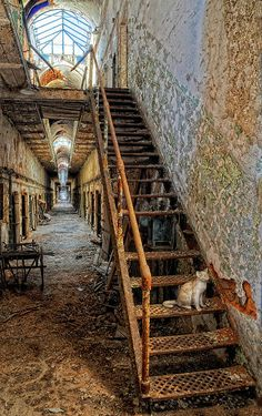 ✯ Eastern State Penitentiary in Philadelphia, Pennsylvania. See the cat statue? They're memoralizing the feral cats on the property.