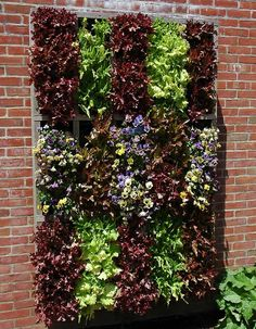 Vertical lettuce. Wow. I wonder how well this would work in AZ. I like it!