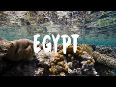 GoPro: Sharm El Sheikh Egypt. Best Entertainment: Snorkeling, Diving and Quading