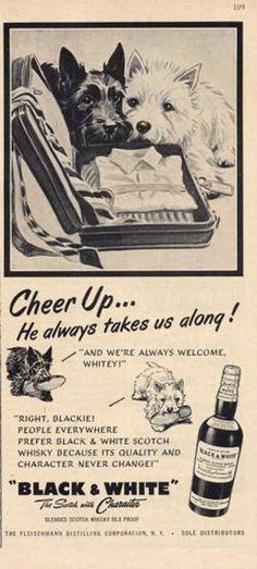 Black & White Cheer Up! Westie Dog (1952)