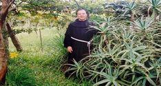 Jmenuje se Romano Zago a jako kněz pochází z Brazílie. Tento úžasný člověk studoval Aloe Vera (rostlina nesmrtelnosti) po dobu dlouhých 20 let a podařilo se mu objevit přirozený lék na rakovinu.