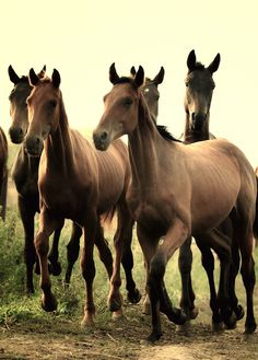 Horses... yearlings maybe?