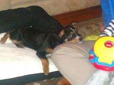Sadie 3 months