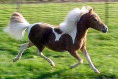 my friend, Flicka....run free, my little friend!!