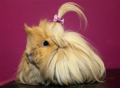 Fashionista guinea pig says that headbands are so last season, it's all about hair bows now! :D
