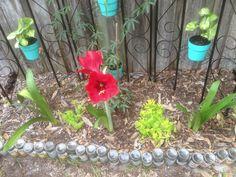 Little garden 2013