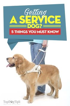 Getting a Service Dog? Here Are 5 Things You Must Know Service Dog Training, Service Dogs, Puppy Care, Pet Care, Dog Pads, Work With Animals, Military Dogs, Guide Dog, Therapy Dogs