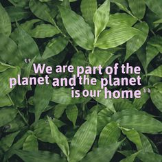 We are part of this jaw dropping and spectacular system of interconnected living beings. We depend on the planet and its habitants as some of them depend on us, we must care for the planet as it is another way to care for ourselves. The planet is our true home.