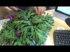 (23) Jak dbać o Grudnika - YouTube Bulb Flowers, Lawn And Garden, Garden Inspiration, Indoor Plants, The Creator, Plant Leaves, Pergola, Succulents, Youtube