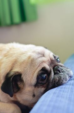So tell me again how i to live with you. Pug