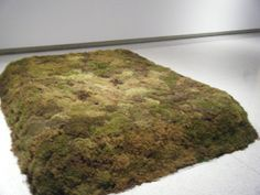 Moss Bed, Queen Artist Meg Webster - Google Search