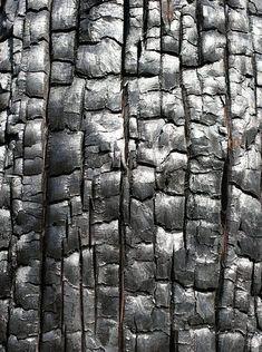 burnt blackened wood cracked shiny