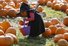 witch girl is picking pumpkins