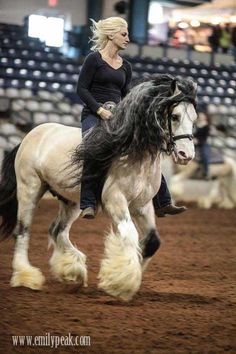 A Legendary Gypsy Vanner !! And props to the rider!! She looks so at home on him !!