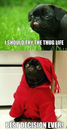 funny pug thug life meme
