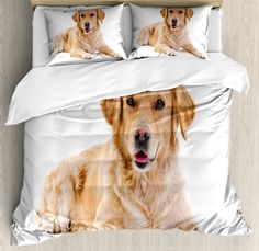 Ambesonne Golden Retriever Queen Size Duvet Cover Set Young Pedigree Puppy Laying Over White Background Sweet Baby Dog Decorative 3 Piece Bedding Set with 2 Pillow Shams Sand Brown White *** Click the image for extra details. (This is an affiliate link). Queen Size Duvet Covers, Comforter Cover, Bed Duvet Covers, Duvet Cover Sets, Pillow Shams, Queen Bedding, Bedding Sets, Baby Dogs, Dog Bed