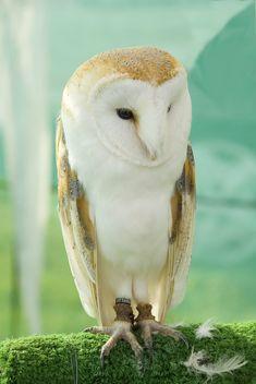 Beautiful owl. I wish I had one. The Neonwoman