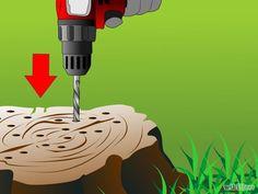 Kill a Tree Stump Step 6.jpg