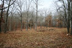 Excellent hunting ground or building site with many sites offering the option for a walkout basement. Ground also has some marketable timber in Poplar Bluff MO