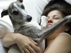 Será que os cachorros realmente amam os donos? Pesquisa aponta sinais do comportamento canino que dizem que sim