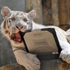 So there's a tiger...chewing on a laptop...exactly like my cat chews on my phone...except it's a tiger......